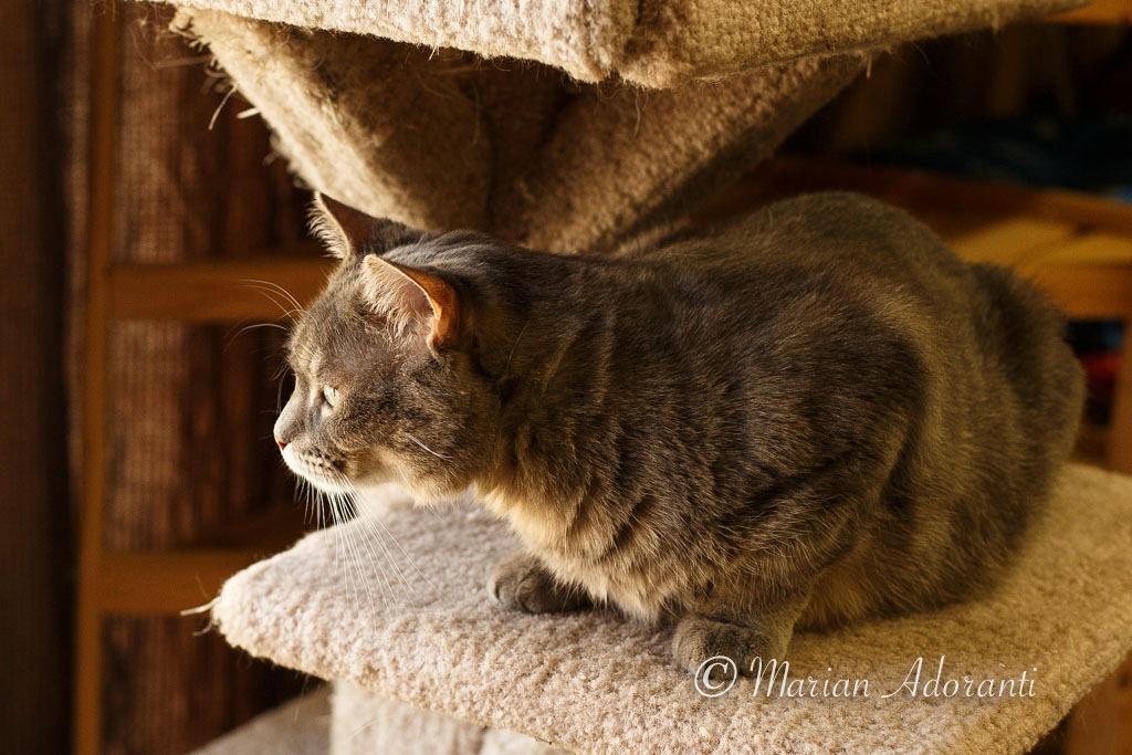 Animal Adoptions of Flamborough-4128