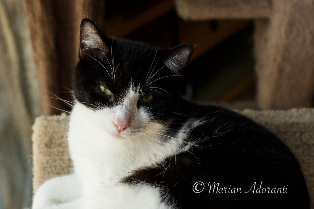 Animal Adoptions of Flamborough-4137