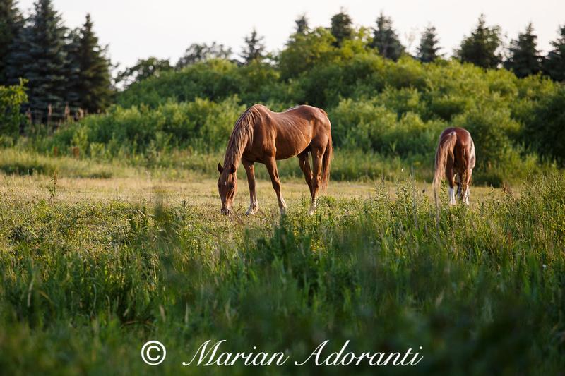 Ontario Horse Rescue 2016-06-27-9130