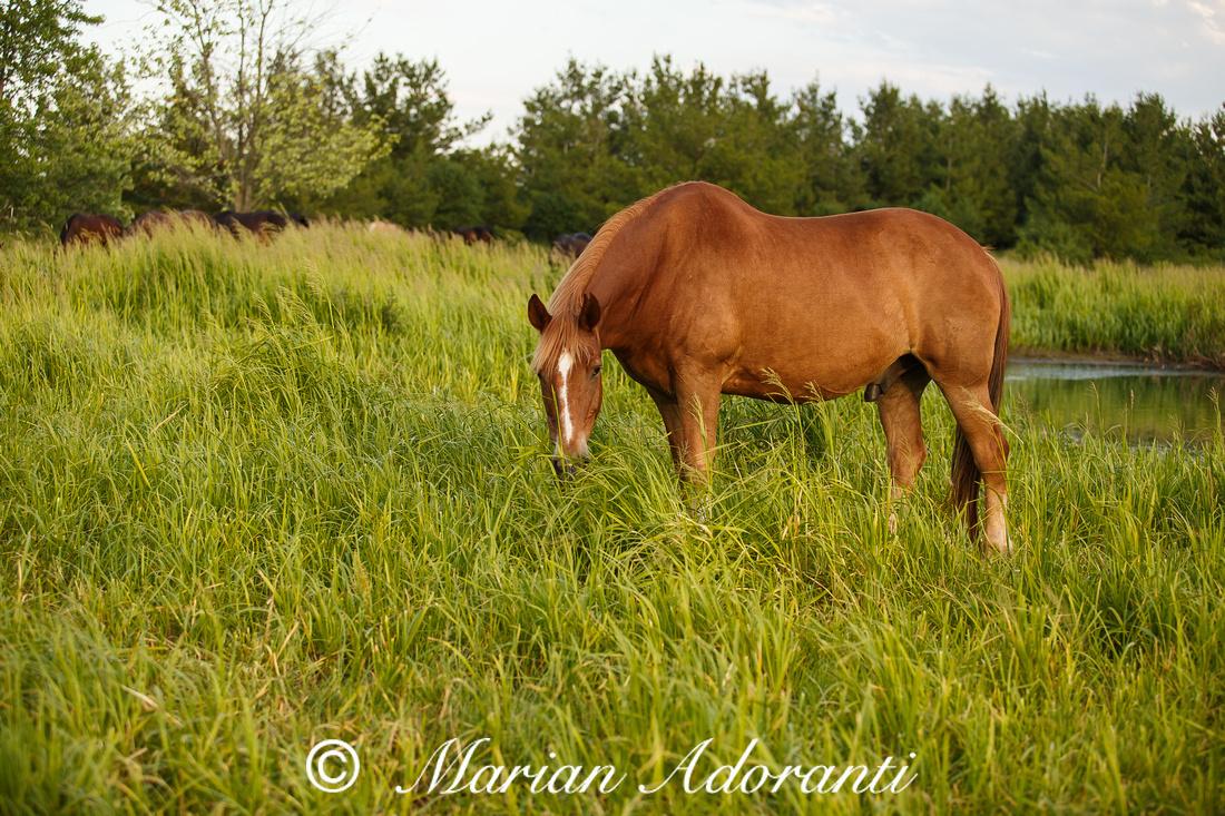 Ontario Horse Rescue 2016-06-27-9181