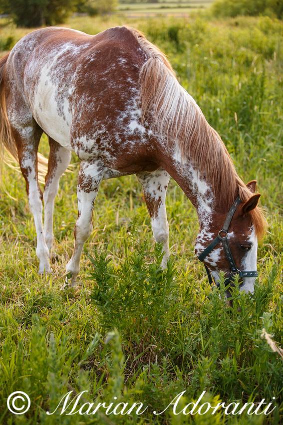 Ontario Horse Rescue 2016-06-27-9156
