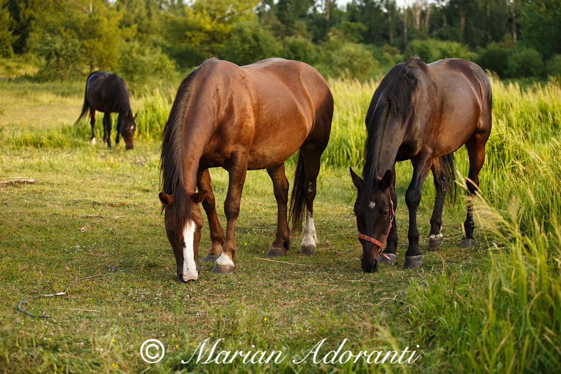 Ontario Horse Rescue 2016-06-27-9178