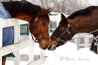 Equine Winter Photo Sesons