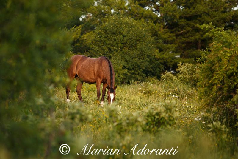 Ontario Horse Rescue 2016-06-27-9160