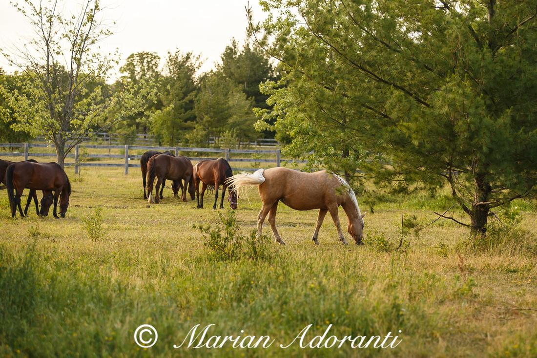 Ontario Horse Rescue 2016-06-27-9165